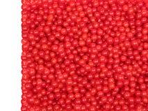 Bacche rosse, mirtillo Immagini Stock Libere da Diritti