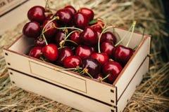 Bacche rosse saporite della ciliegia Immagini Stock Libere da Diritti