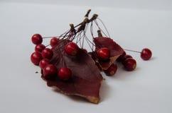 Bacche rosse su fondo bianco fotografie stock