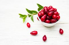 Bacche rosse succose in una ciotola bianca su una tavola bianca Concetto stagionale Bacche organiche del corniolo Fotografia Stock