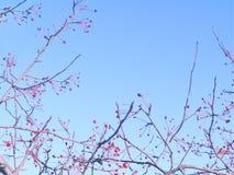Bacche rosse sui rami d'ondeggiamento degli alberi contro il cielo blu Copi lo spazio immagine stock