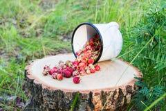 Bacche selvatiche nella foresta immagini stock