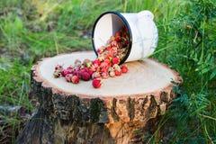 Bacche selvatiche nella foresta fotografia stock libera da diritti