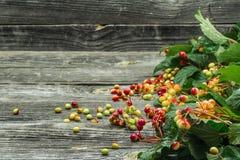 Bacche su un bello fondo di legno, inverno, autunno Fotografia Stock Libera da Diritti