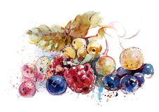 Bacche sulla tavola (fragole, lamponi, mirtilli, uva passa) Fotografia Stock Libera da Diritti
