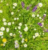 Bacground用草本和花在春天 免版税库存图片