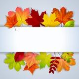 Bacground met olorful de herfstbladeren en plaats voor tekst Stock Foto