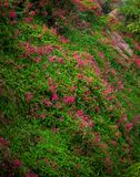Bacground of tiny flowers. Background of tiny flowers blooming on the rock Stock Images