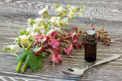 Bach Flower Remedies Of Red And White Chestnut Royalty Free Stock Photo