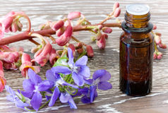 Bach Flower Remedies Of Red Chestnut And Violets Stock Photography