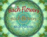 Bach flowers crystal ball Stock Photography