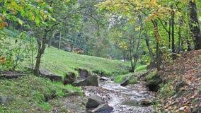 Bach im Herbstpark stock video footage