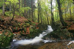 Bach im Herbstwald Stockbild