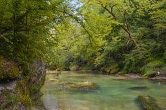 Bach im Wald Stockfoto