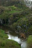 Bach im Wald Lizenzfreies Stockfoto