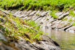 Bach schoss im Frühjahr mit flacher Schärfentiefe, Polen stockfoto