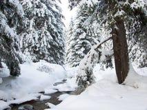 Bach und Kiefer im Winter Stockfoto