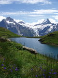bachalpsee switzerland Royaltyfri Foto