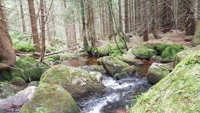 Bachlauf durch Felsen. Wanderung im Harz Stock Images