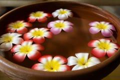 Bacia com as flores na água Fotografia de Stock Royalty Free