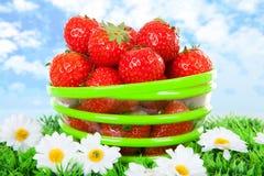 Bacia com as morangos frescas na grama foto de stock royalty free