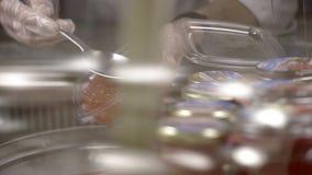 Bacia com caviar vermelho video estoque