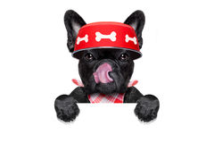 Bacia com fome do cão imagem de stock royalty free