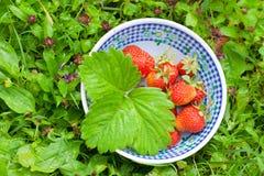 Bacia com morangos frescas Imagens de Stock Royalty Free