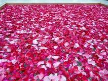 Bacia da água com pétalas cor-de-rosa Imagem de Stock Royalty Free