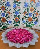 Bacia da flor - Jaipur - Índia Fotografia de Stock Royalty Free