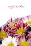 Bacia de água e de conceito dos flor-TERMAS Foto de Stock