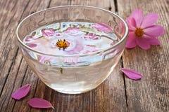 Bacia de água e de flor de flutuação Fotos de Stock Royalty Free
