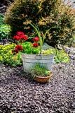 Bacia de aço e ajardinar das flores vermelhas em pasta Fotografia de Stock