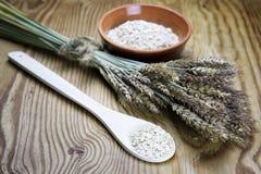 Bacia de cereal da grão de brotos Fotos de Stock Royalty Free