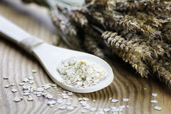 Bacia de cereal da grão de brotos Imagens de Stock Royalty Free