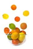 Bacia de citrino da mosca Fotografia de Stock Royalty Free
