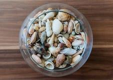 Bacia de conchas do mar imagem de stock