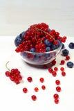 Bacia de corintos vermelhos e de mirtilos Fotos de Stock