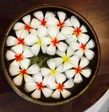Bacia de flores Imagens de Stock