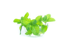 Bacia de folhas de hortelã isoladas no fundo branco, vista dianteira, minuto Imagens de Stock