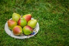 Bacia de fruto na grama verde Imagem de Stock