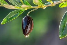 Bacia de madeira completamente de azeitonas e de galhos verde-oliva foto de stock