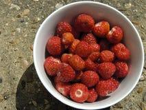 Bacia de morangos recentemente escolhidas Imagem de Stock Royalty Free