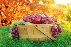Bacia de romã das peras das maçãs do fruto da ação de graças Imagem de Stock