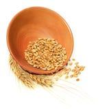 Bacia de trigo imagem de stock