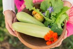 Bacia de vegetais recentemente escolhidos nas mãos das crianças Imagens de Stock Royalty Free