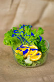 Bacia de vidro com salada verde fresca, as laranjas cortadas e pintura azul Imagens de Stock Royalty Free