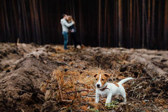 Baciando le giovani coppie amorose in foresta sono soggiorno dietro il thei fotografie stock libere da diritti