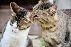 Baciare dei gatti fotografia stock libera da diritti