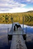 Baciare i cani Fotografia Stock